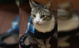 Barranco: ofrecen recompensa por gato desaparecido