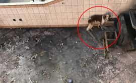 Los Olivos: niegan ayuda para un perro abandonado en un techo hace varios días