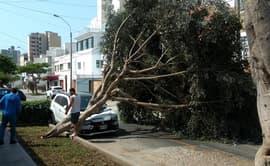 Magdalena del Mar: árbol cae encima de automóvil y lo destroza