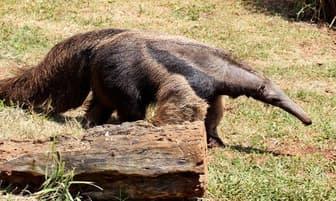 Ocho especies consideradas en peligro de extinción por un medio español