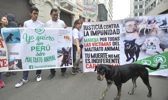 Grupo de animalistas busca concientizar sobre el maltrato animal [FOTOS]
