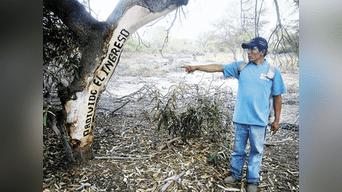 Chiclayo Ganaderos Denuncian Tala Indiscriminada En El Bosque De La