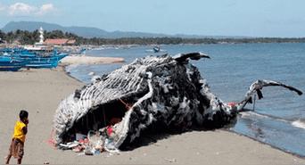 Resultado de imagen de ballena muerta por plastico