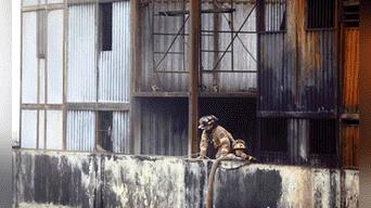 Los bomberos revisaron las instalaciones tras apagar el fuego luego de varios días Foto: Michael Ramon