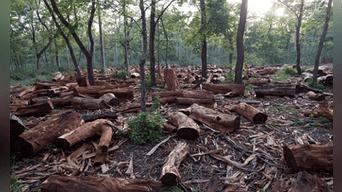 Deforestación. Fotografía: Archivo La República
