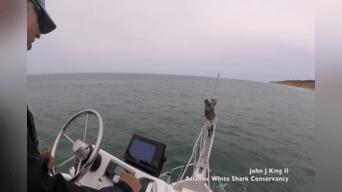Miles de personas en YouTube quedaron impactadas con un video que muestra el preciso momento en que un pescador se salva de ser la comida de un enorme tiburón. Foto: Captura.