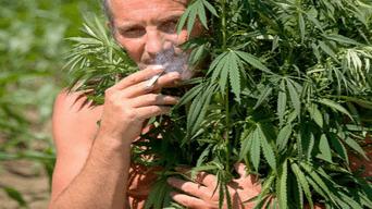 Una empresa de marketing busca a los seis mejores catadores de marihuana.