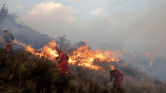 Un incendio forestal se registra  en el tramo Abra Corao, en el distrito de San Sebastián, en Cusco.