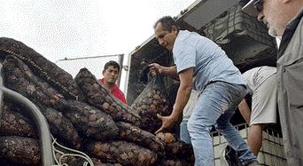 Arequipa: En el mar arequipeño se siembran las conchas de abanico