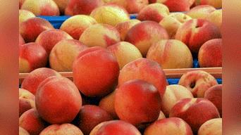 alerta en chile por sospecha de bacteria en frutas exportadas a