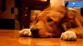 Consejos para evitar golpes de calor en las mascotas