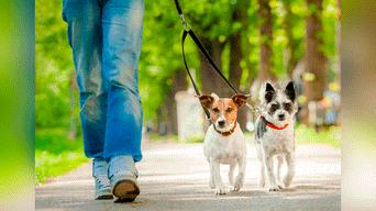 Consejos Golpes del sol en mascotas