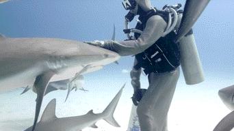 YouTube viral: distraída buceadora no se percata de la presencia de tiburones y sucede esto