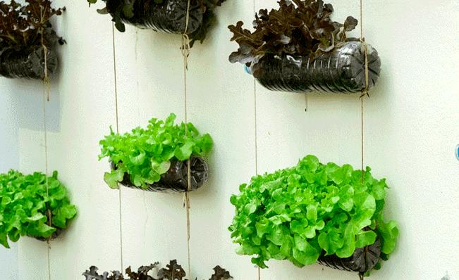 Jardines Colgantes Perfectos Para Una Casa Pequena O Departamento