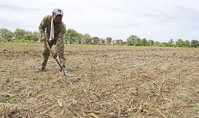 Piura pierde 20 mil hectáreas al año por la deforestación
