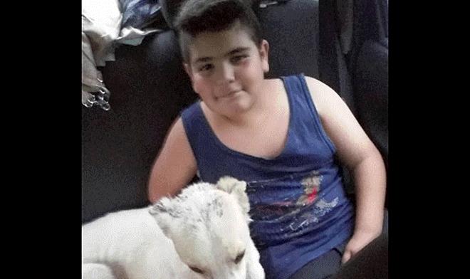 Facebook  niño puso a la venta su juguete favorito para ayudar a un perro  herido  54cfcd2b1a7