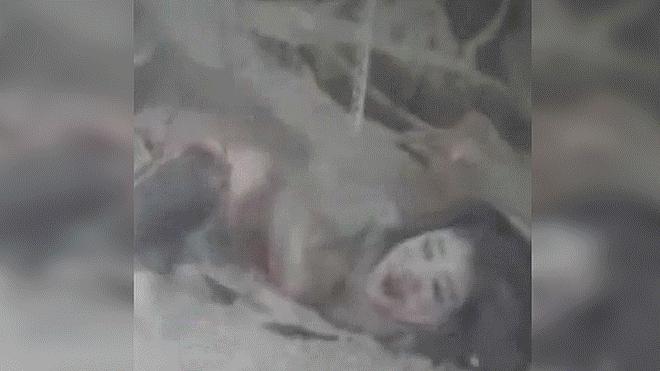 El asombroso rescate de una mujer entre los escombros en Israel [VIDEO]
