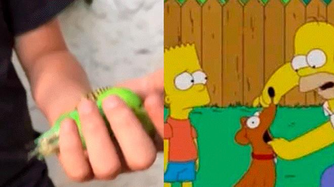 """Facebook: ¿Los Simpsons predijeron la muerte del """"Chimuelo? Imágenes asombran al mundo"""