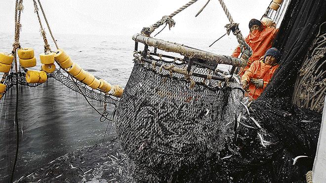 """Estado exige S/ 66 mllns de reparación al """"Rey de la pesca negra"""" y tribunal lo rebaja a solo S/ 100 mil"""