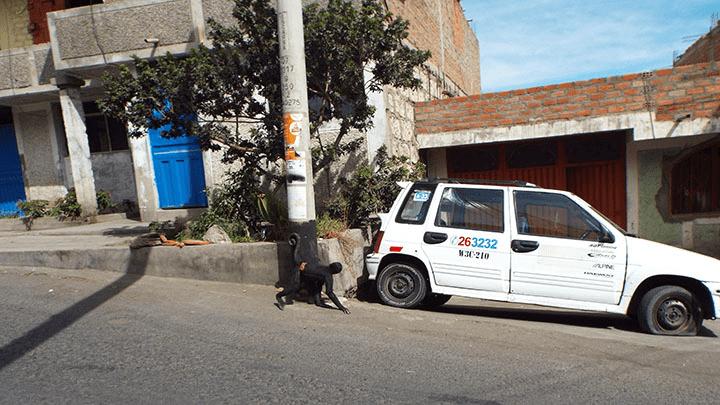 El mono araña vivía enjaulado en una casa de Miraflores