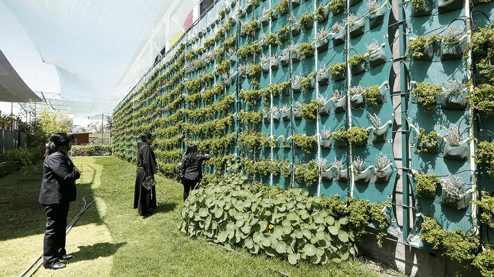 Vida. Plantas adornan paredes de la institución educativa, ubicada en Bustamante.