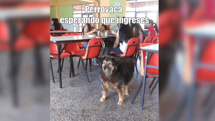Resultados del examen de San Marcos 2019 - I provocan divertidos memes en las redes sociales.