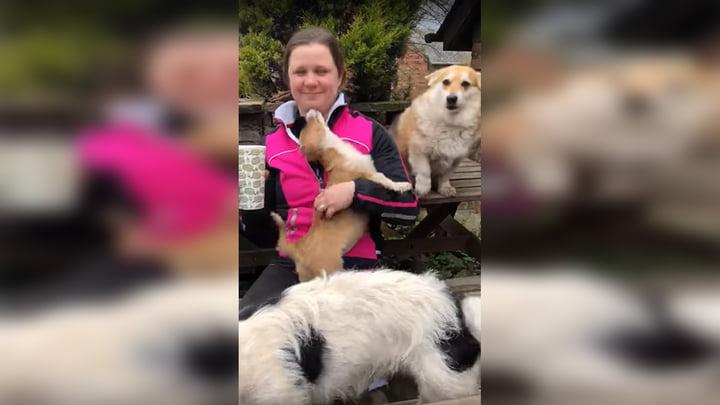 Perro exige a su dueña que le haga masajes y miles quedan sorprendidos